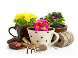 spring flower in pot with garden tools