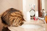 Cat On The Washbasin
