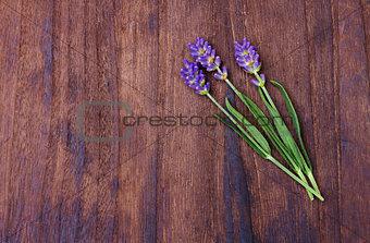 lavender on wood background