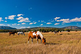 Horses enjoying the peace in Yellowstone National Park, USA