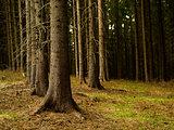forest still life