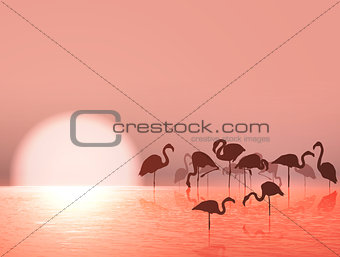 Flamingo Silhouette and Sunset