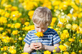 boy at flower field