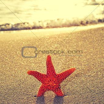 seastar on the shore of a beach