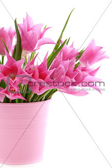 Beautiful pink tulips in a bucket.