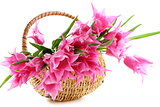Pink tulips in wicker basket. 