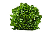 a Head of butter lettuce on white background