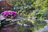 Waterfall at Crystal Springs Rhododendron Garden in Spring