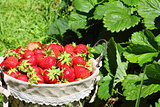 fresh, strawberries in a basket
