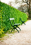 bench in park on road with green bushes