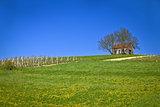 Cottage and vineyard on idyllic hill