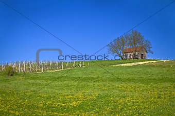 Cottage and vineyard on idyllic hill