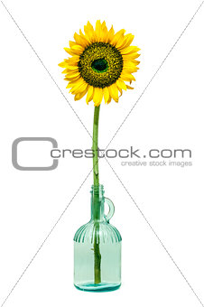 Sunflower in a bottle