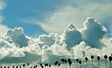 Cloudy sky with row of palm trees