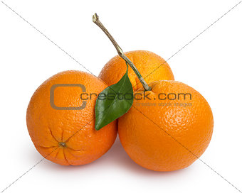 three ripe round oranges with stem and leaf