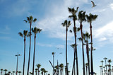 palm trees venice beach