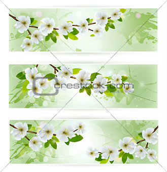 Three nature banners with blossoming tree branches. Vector illus