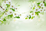 Nature background with white blossoming branches. Vector.