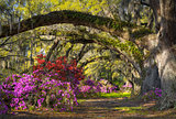 Charleston SC Spring Bloom Azalea Flowers South Carolina Plantation Garden
