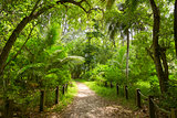 Walking path in green forest. Saychelles. Mahe island.
