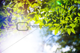 Branch green leafes in sunny day