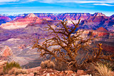 Desert view of World Famous Grand Canyon National Park,Arizona, United States