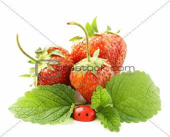 ripe organic strawberries with green leaf