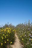 Wild flowers at the Ria Formosa Nature Reserve, Qinta do Lago, A