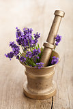 mortar with lavender flowers 