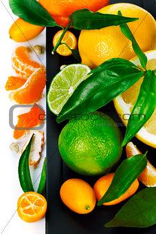 Citrus fruits border
