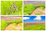 Meadow Backgrounds Collage