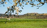 Postcard from Monteriggioni