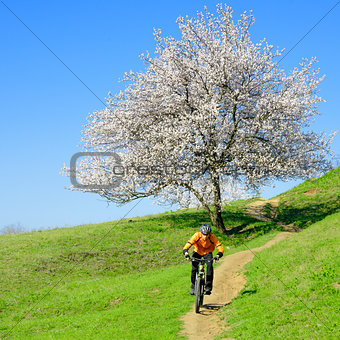 Cyclist Riding the Bike on the Green Hill with Beautiful Tree