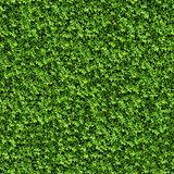 Green Bush. Seamless Texture.