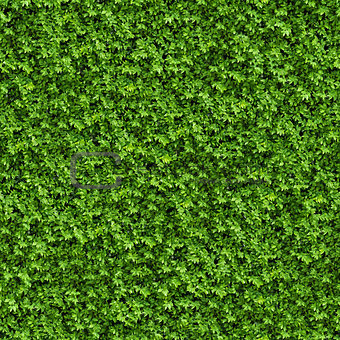 Green Bush. Seamless Texture.