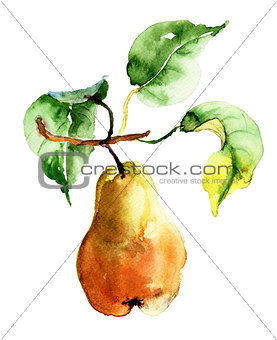 Watercolor illustration of pear