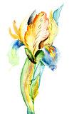 Stylized Iris flower