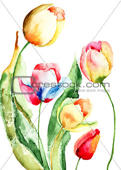 Beautiful tulips flowers