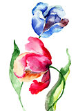 Tulips flowers, Watercolor painting