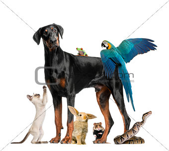 Group of pets,Group of pets - Dog, cat, bird, reptile, rabbit, isolated on white