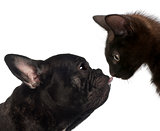 Close-up of a French bulldog licking the kitten's nose against white background