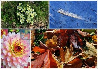 floral seasons