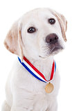 Award Winner Dog