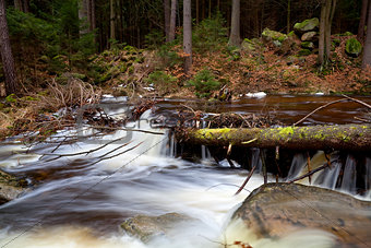 alpine fast river in forest