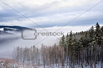 forest in mountains in snow
