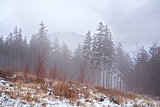 snow and fog in forest