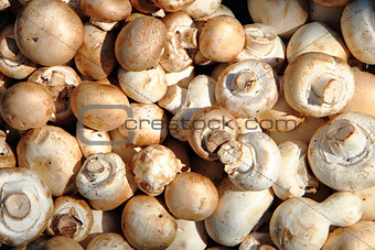 champignons mushrooms