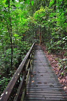 Wooden trail at forested area at Lower Peirce