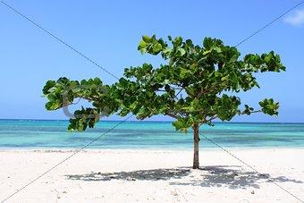 Cuban Paradise
