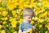 cute boy at the flower field
